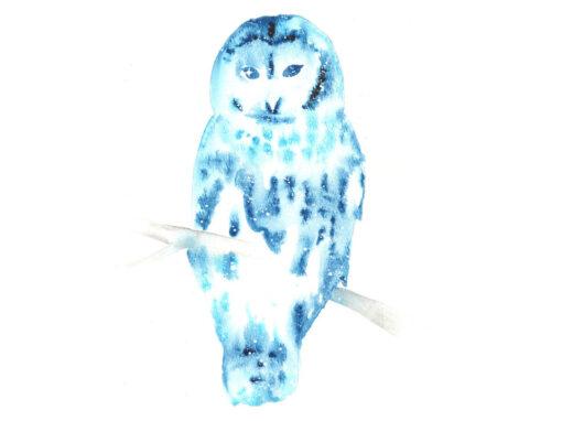 Owl, Barred
