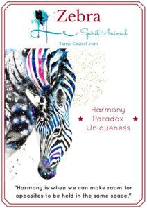 Zebra symbolism & meaning