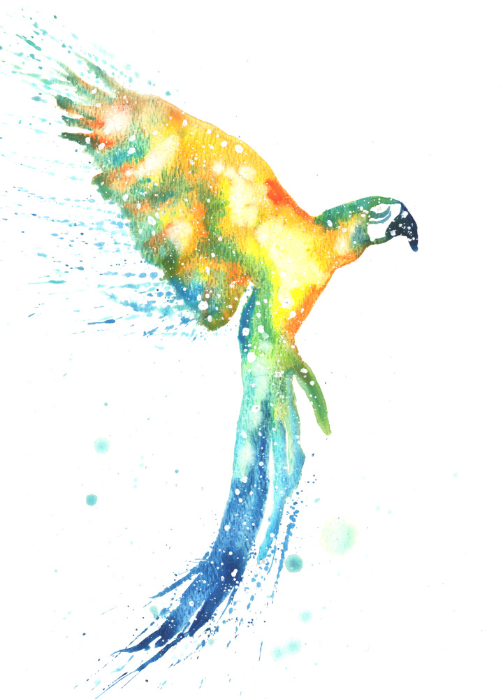 Macaw Parrot | Cosmic Animal Meaning, Medicine & Magic