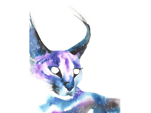 Caracal Cat